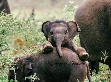 baby elephant_small